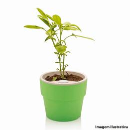 Vaso-de-plastico-autoirrigavel-Plantar-Ou-verde-125-x-10-cm---26426