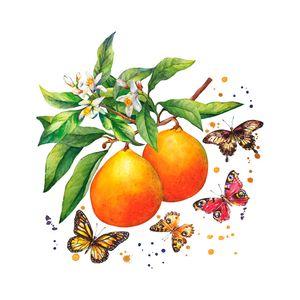 Guardanapo-de-Papel-Frutas-e-Borboletas-33X33CM-20PCS