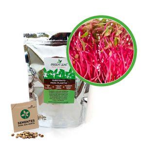 Kit-Horta-Inteligente-Green-Leaf-Beterraba-Microverdes